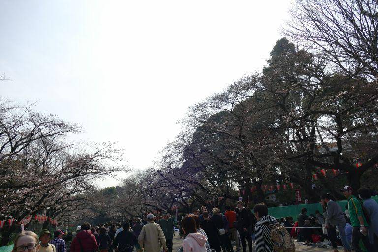 Japan-food-street7