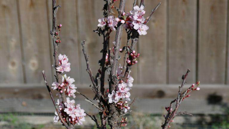 Spring-in-Alberta21