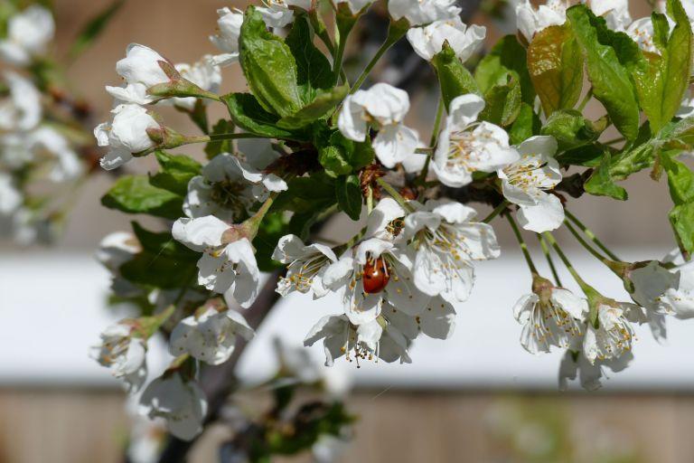 Spring-in-Alberta30