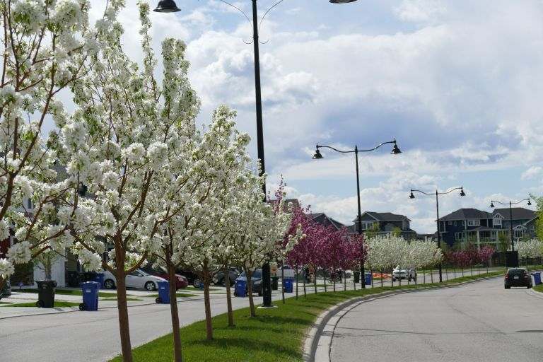 Spring-on-our-street1
